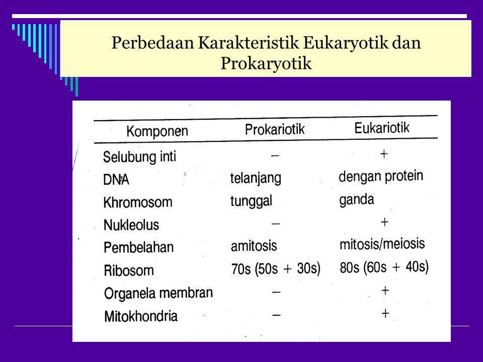 Perbedaan Karakteristik Eukaryotik dan Prokaryotik
