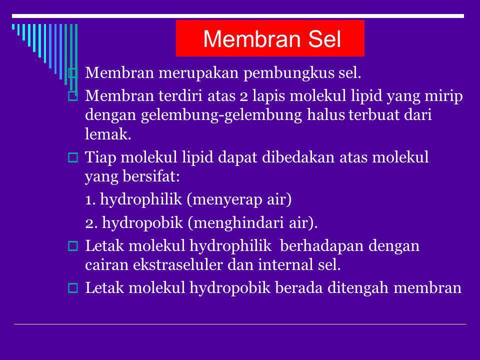 Membran Sel Membran merupakan pembungkus sel.