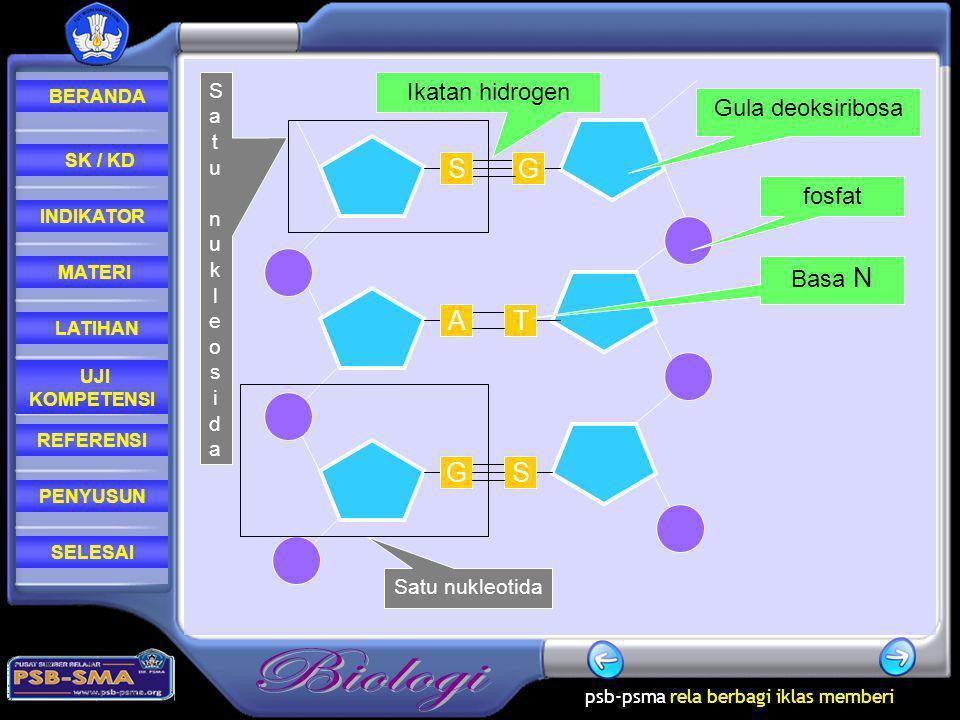 S G A T G S Ikatan hidrogen Gula deoksiribosa fosfat Basa N Satu