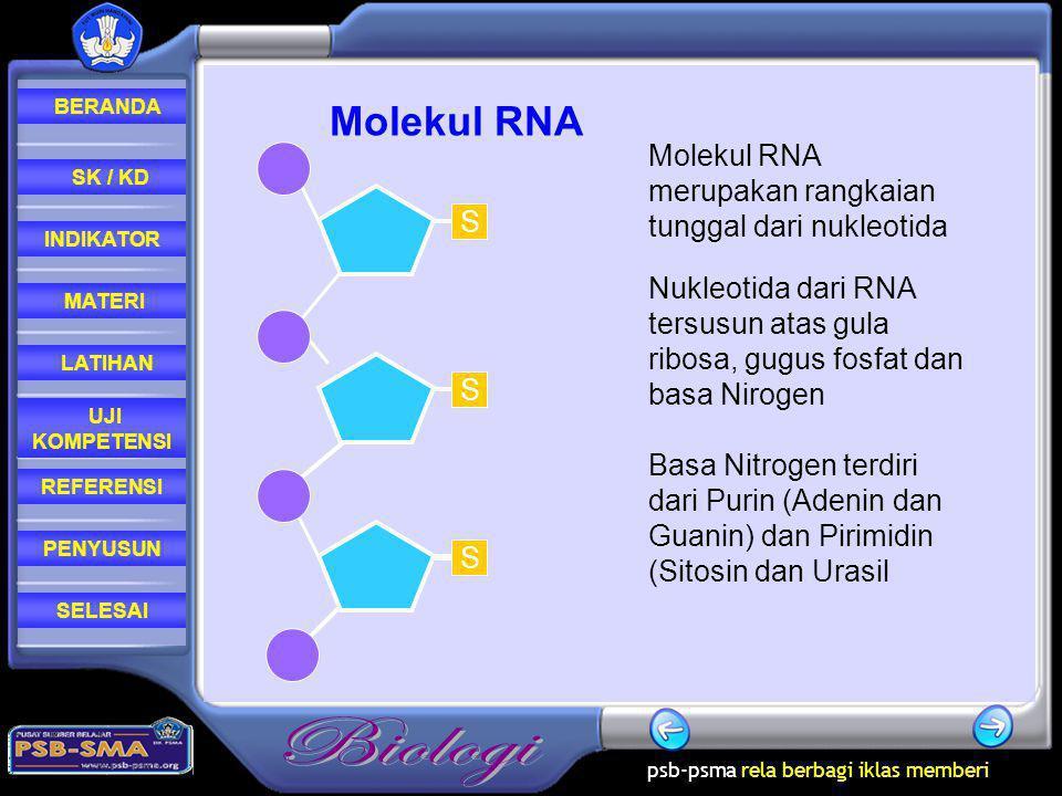 Molekul RNA Molekul RNA merupakan rangkaian tunggal dari nukleotida S