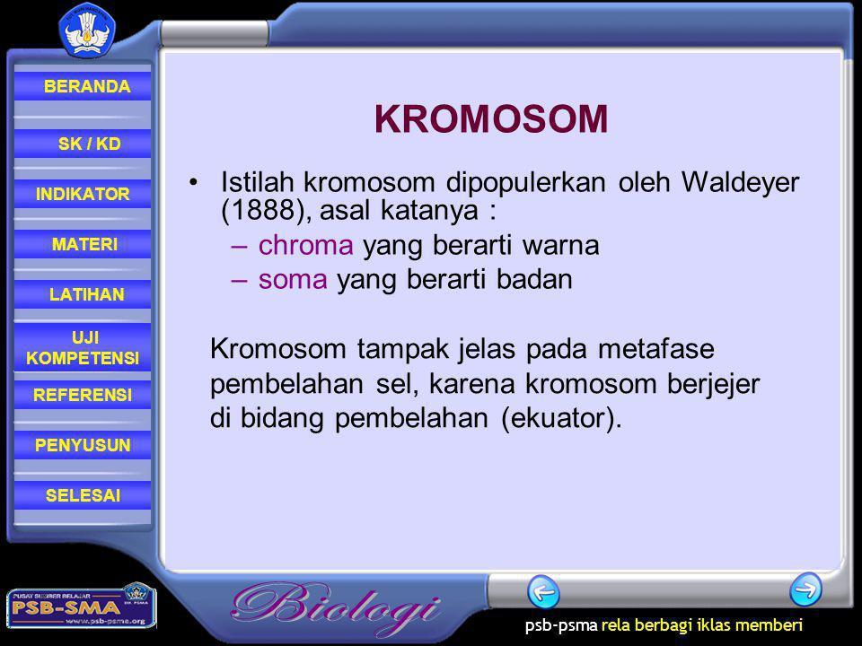 KROMOSOM Istilah kromosom dipopulerkan oleh Waldeyer (1888), asal katanya : chroma yang berarti warna.