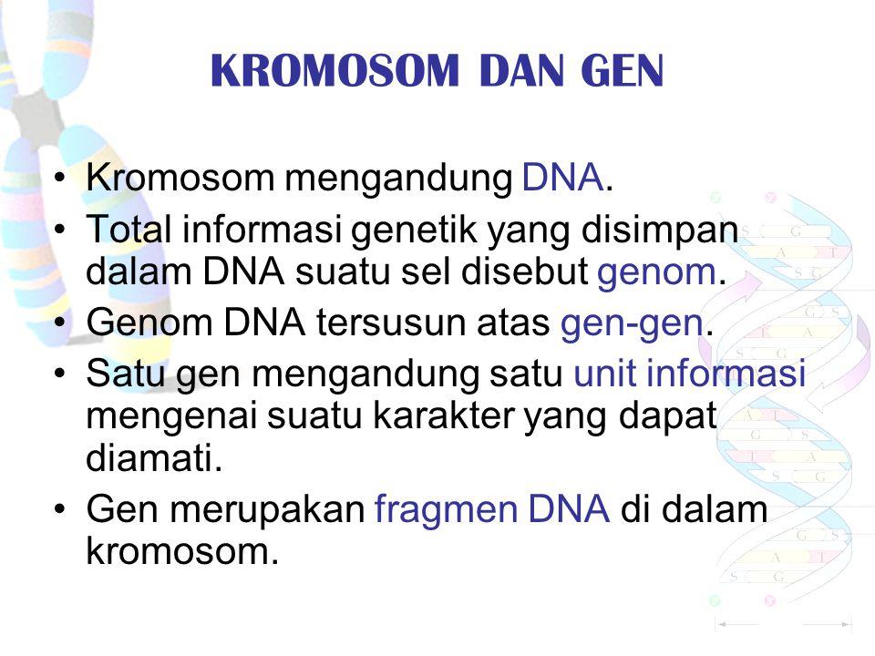 KROMOSOM DAN GEN Kromosom mengandung DNA.
