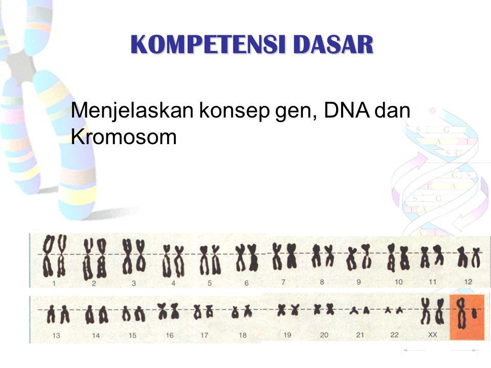 KOMPETENSI DASAR Menjelaskan konsep gen, DNA dan Kromosom