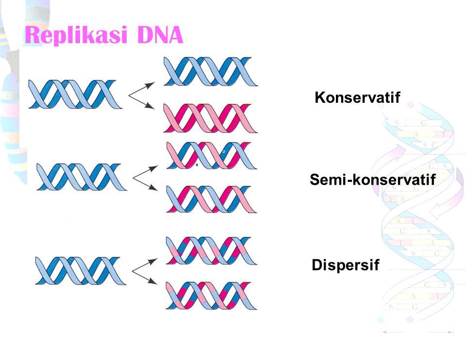 Replikasi DNA Konservatif Semi-konservatif Dispersif