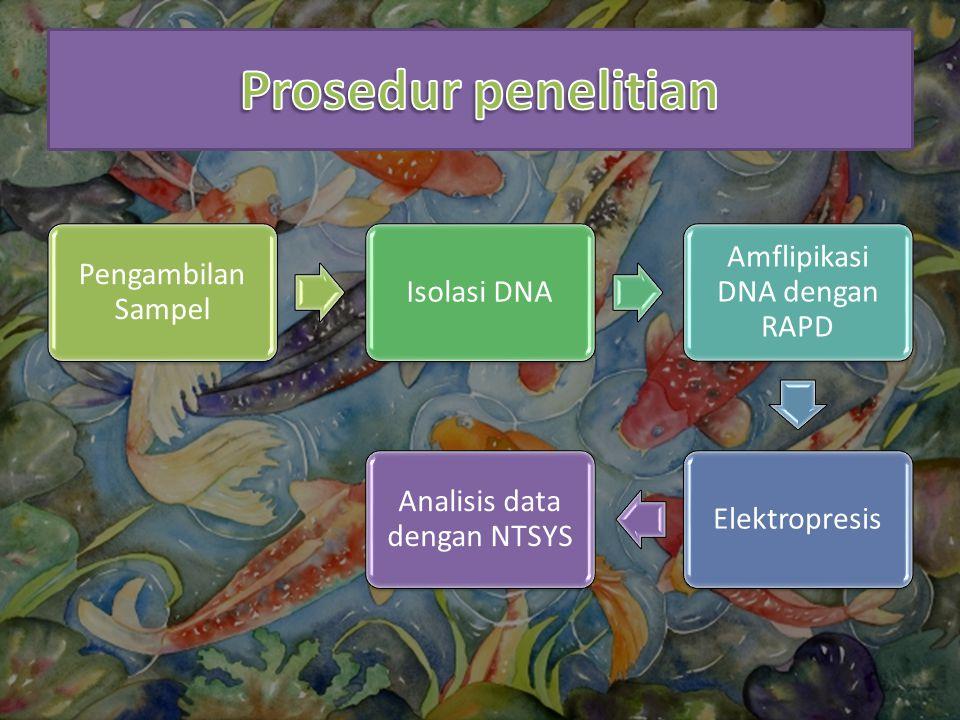 Prosedur penelitian Pengambilan Sampel Isolasi DNA