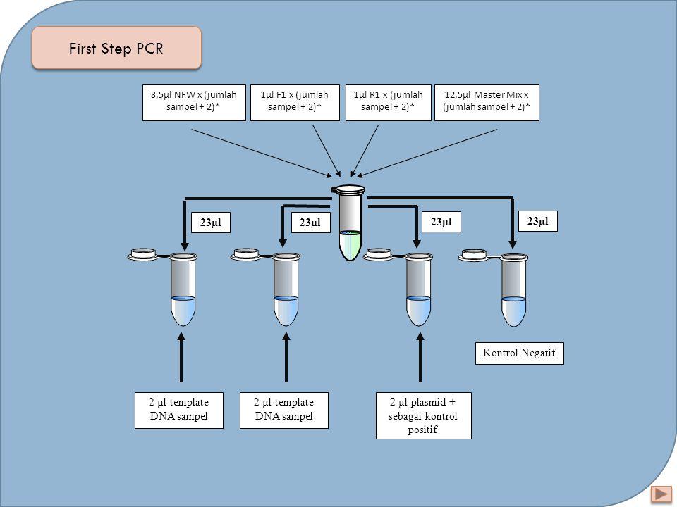 First Step PCR 23µl 23µl 23µl 23µl Kontrol Negatif