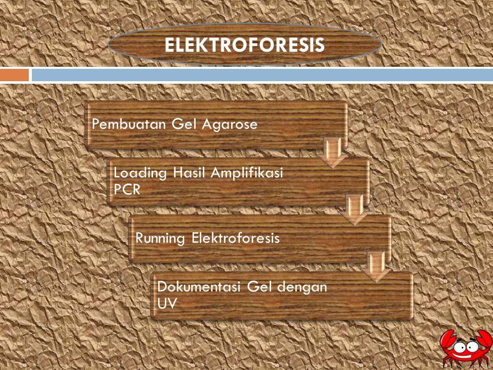 ELEKTROFORESIS Pembuatan Gel Agarose Loading Hasil Amplifikasi PCR