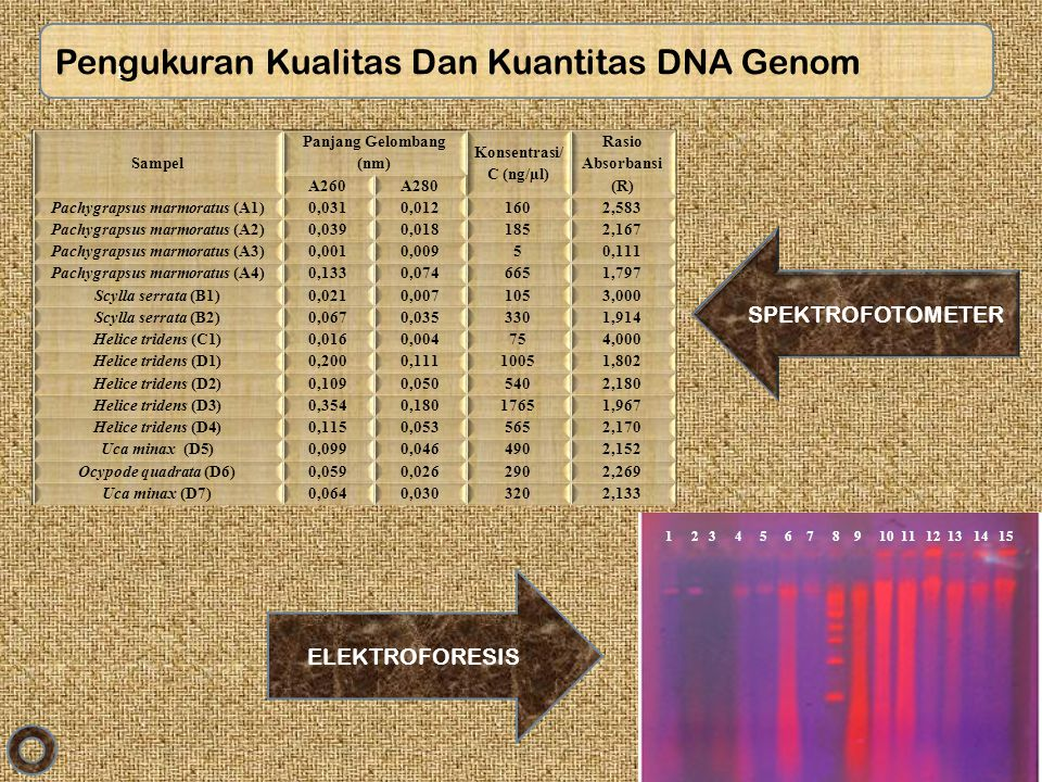 Pengukuran Kualitas Dan Kuantitas DNA Genom