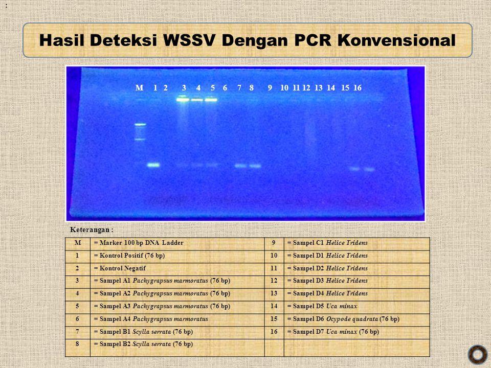 Hasil Deteksi WSSV Dengan PCR Konvensional