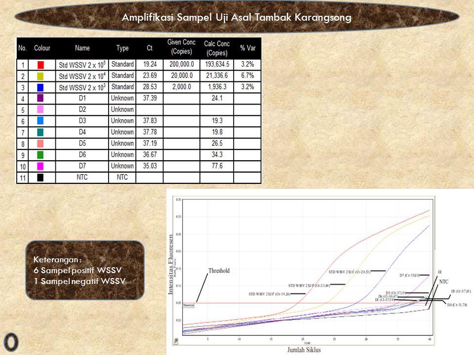 Amplifikasi Sampel Uji Asal Tambak Karangsong