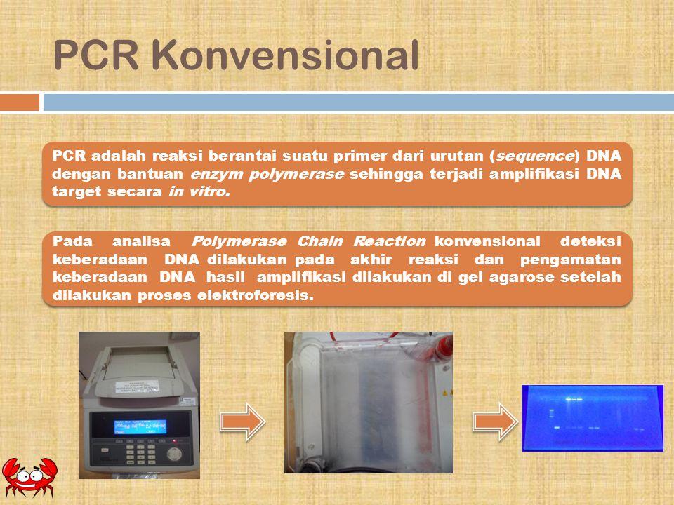PCR Konvensional