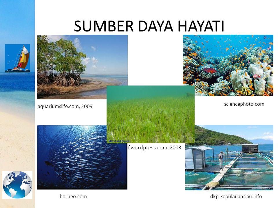 SUMBER DAYA HAYATI maruf.wordpress.com, 2003 sciencephoto.com