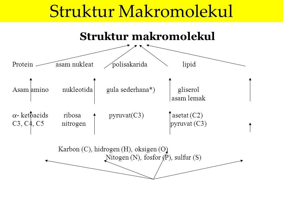 Struktur makromolekul