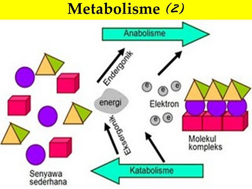 Metabolisme (2)