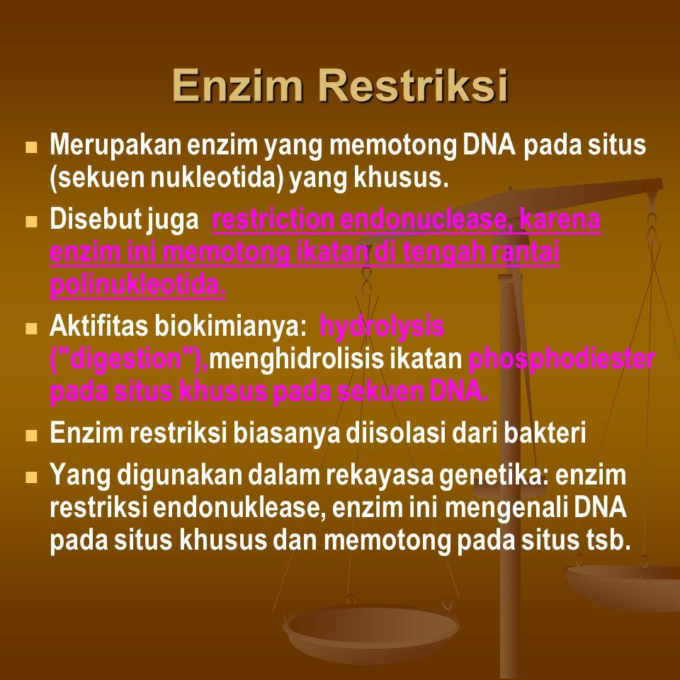 Enzim Restriksi Merupakan enzim yang memotong DNA pada situs (sekuen nukleotida) yang khusus.