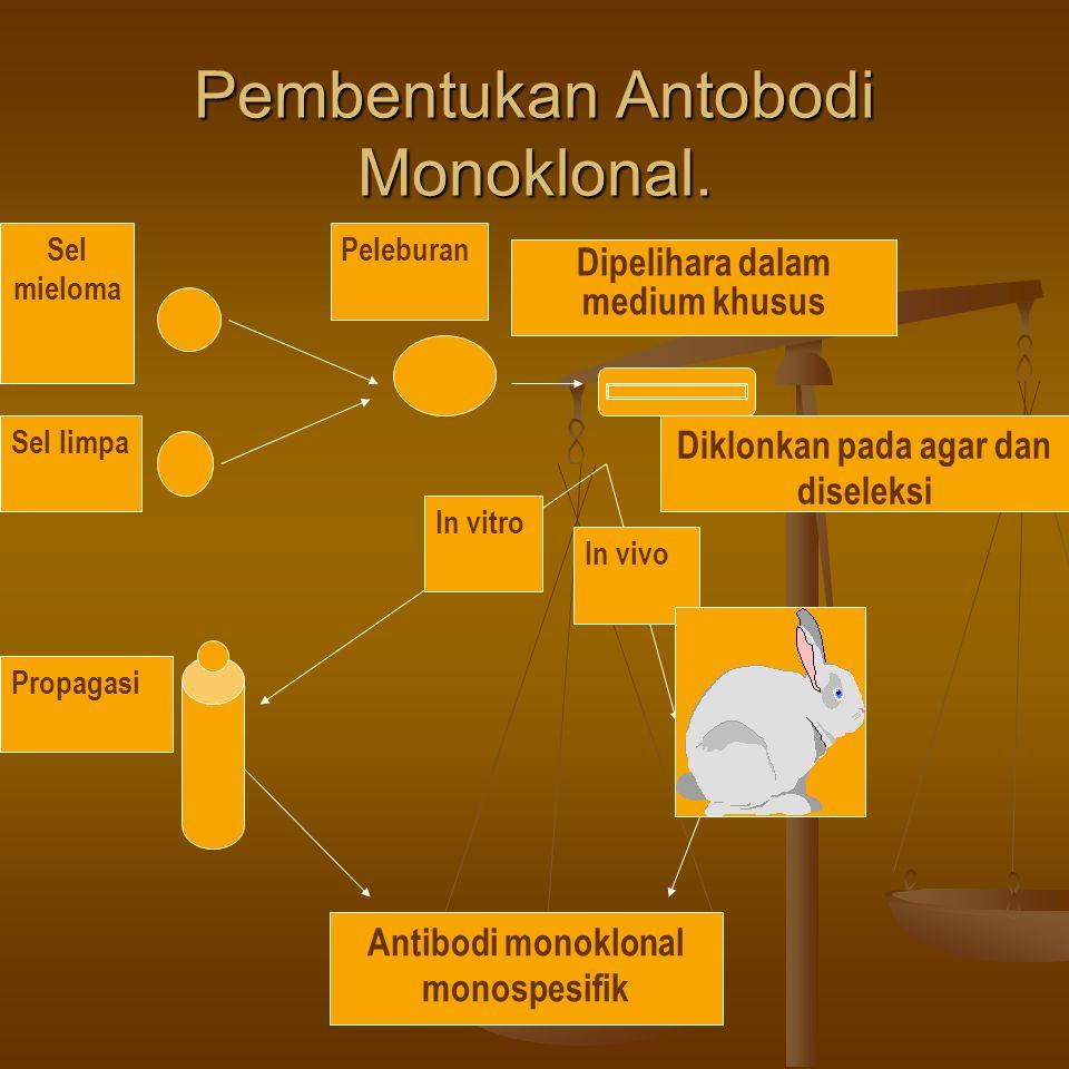 Pembentukan Antobodi Monoklonal.
