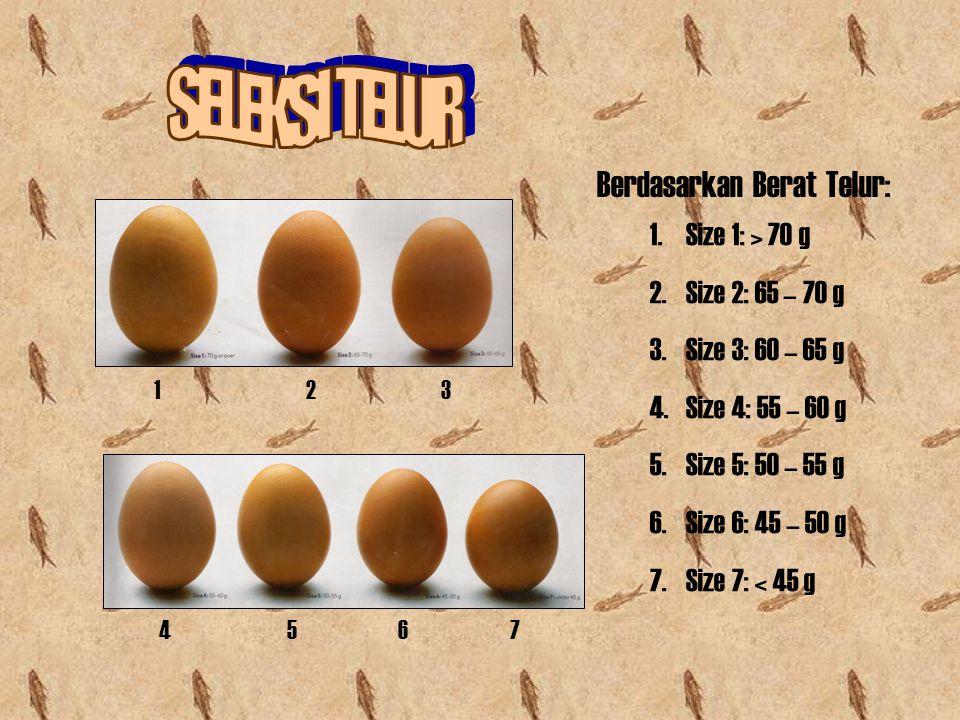 Berdasarkan Berat Telur: