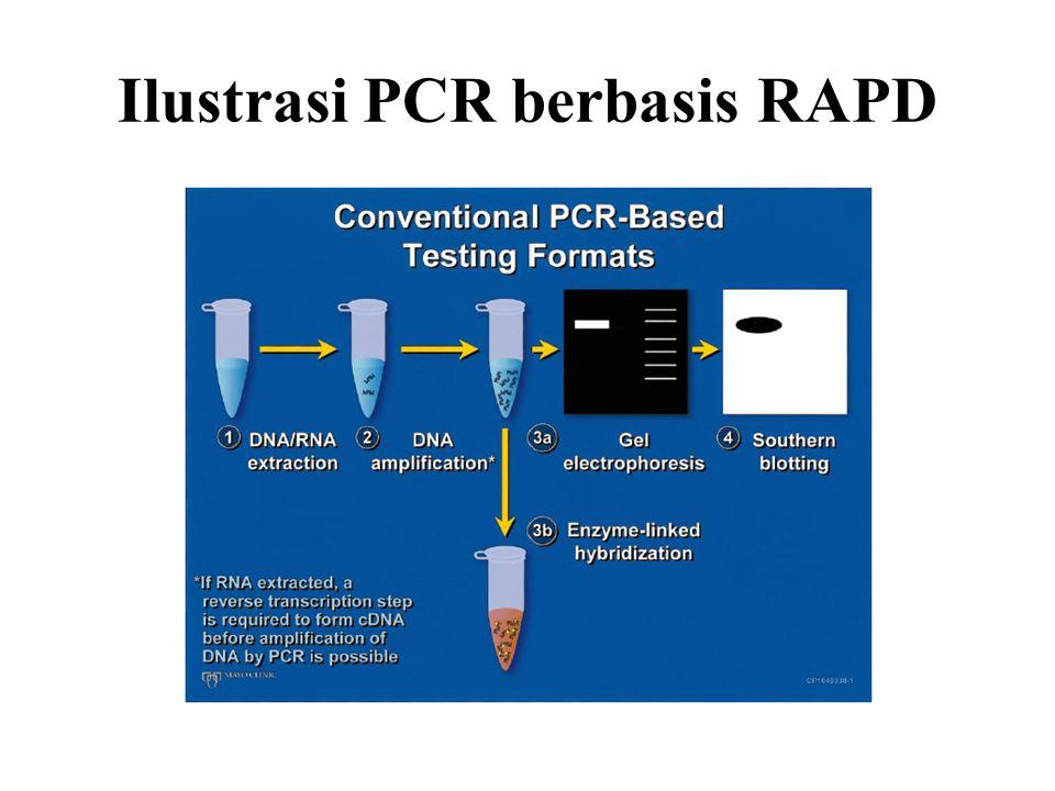 Ilustrasi PCR berbasis RAPD