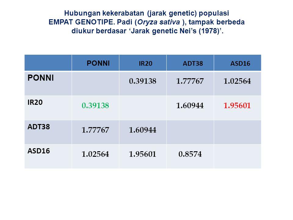 Hubungan kekerabatan (jarak genetic) populasi EMPAT GENOTIPE