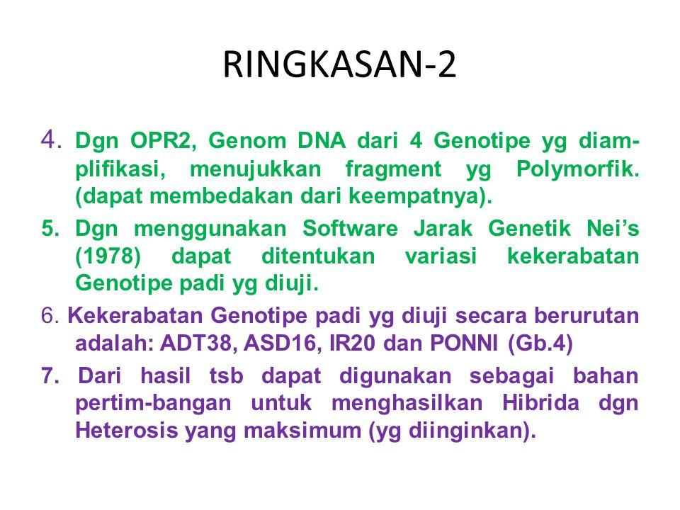 RINGKASAN-2 4. Dgn OPR2, Genom DNA dari 4 Genotipe yg diam-plifikasi, menujukkan fragment yg Polymorfik. (dapat membedakan dari keempatnya).