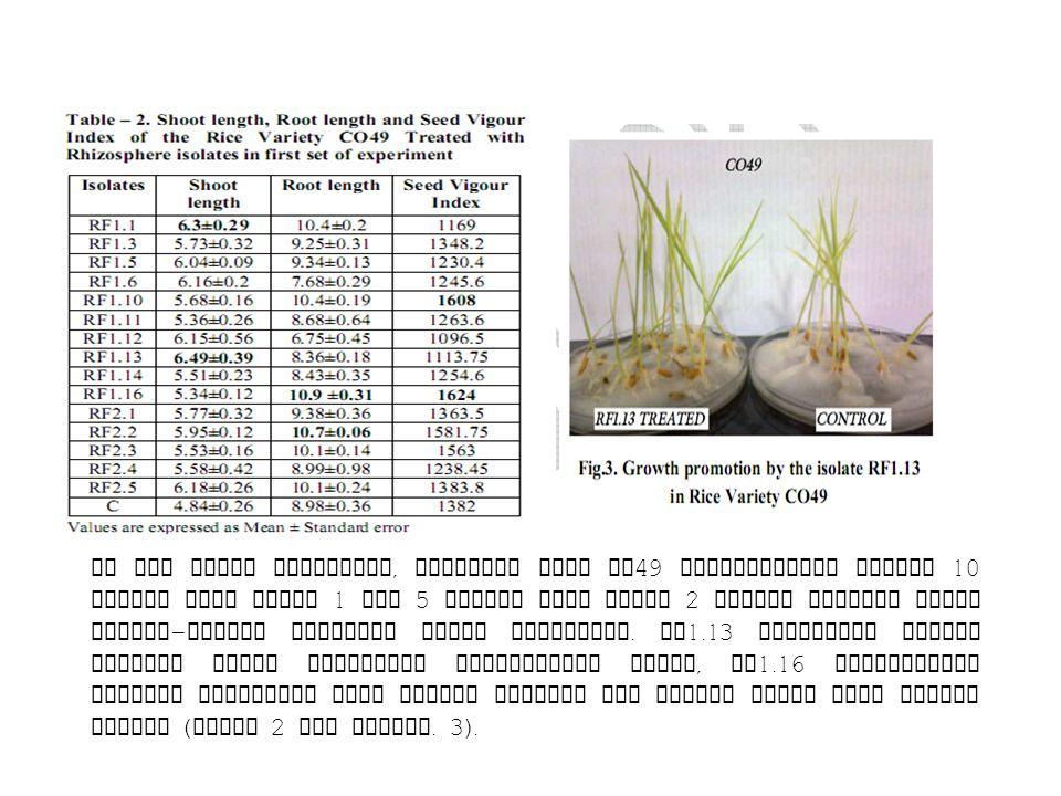 Di set kedua percobaan, varietas padi CO49 diperlakukan dengan 10 isolat dari Sawah 1 dan 5 isolat dari Sawah 2 dengan kontrol untuk masing-masing varietas tanpa perlakuan.