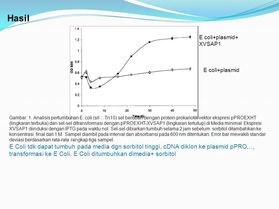Hasil E coli+plasmid+ XVSAP1. E coli+plasmid.