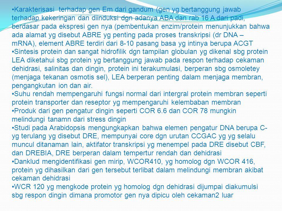 Karakterisasi terhadap gen Em dari gandum (gen yg bertanggung jawab terhadap kekeringan dan diinduksi dgn adanya ABA dan rab 16 A dari padi, berdasar pada ekspresi gen nya (pembentukan enzim/protein menunjukkan bahwa ada alamat yg disebut ABRE yg penting pada proses transkripsi (dr DNA – mRNA), element ABRE terdiri dari 8-10 pasang basa yg intinya berupa ACGT