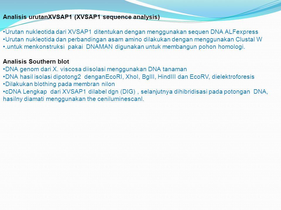 Analisis urutanXVSAP1 (XVSAP1 sequence analysis)