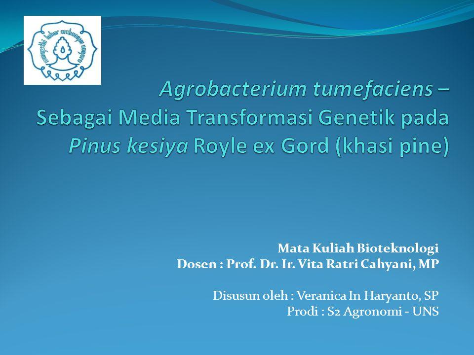 Agrobacterium tumefaciens – Sebagai Media Transformasi Genetik pada Pinus kesiya Royle ex Gord (khasi pine)