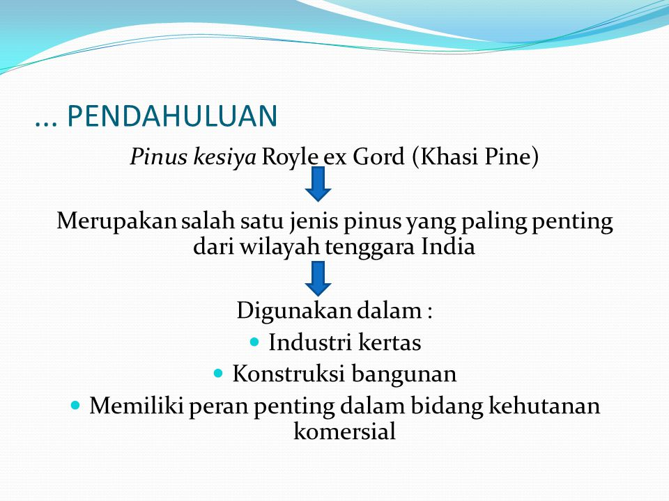 ... PENDAHULUAN Pinus kesiya Royle ex Gord (Khasi Pine)