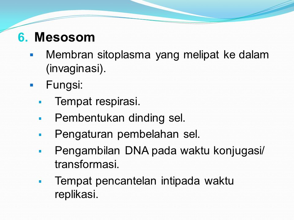 Mesosom Membran sitoplasma yang melipat ke dalam (invaginasi). Fungsi: