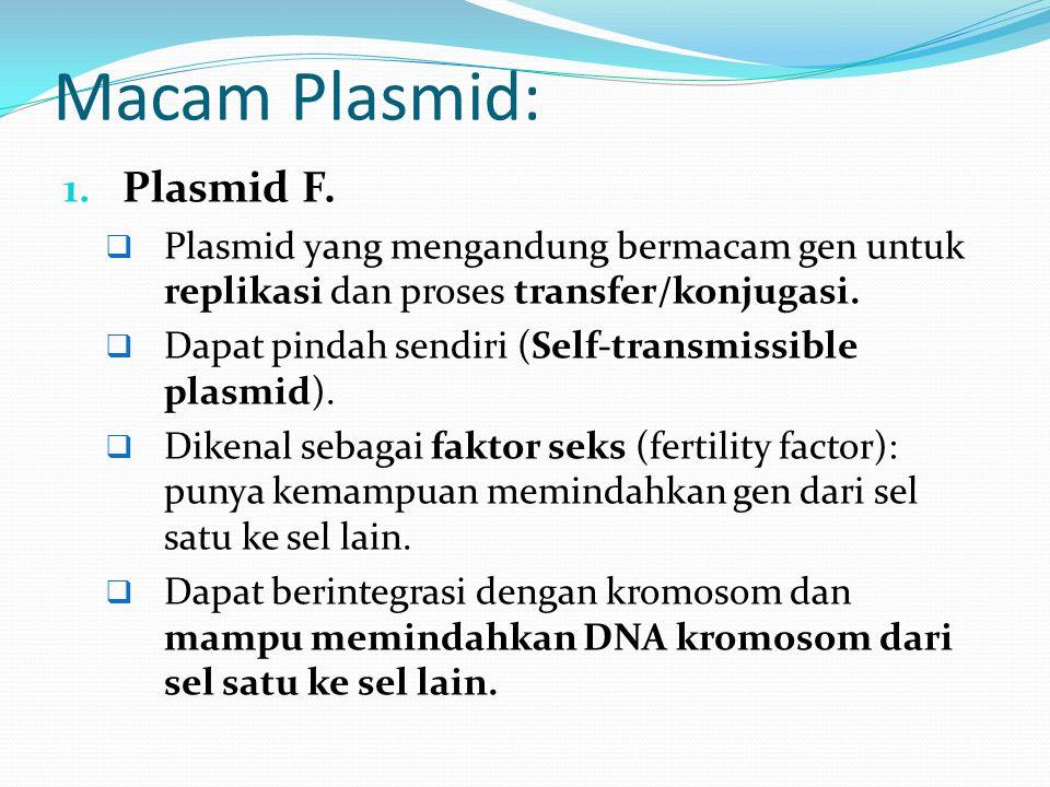 Macam Plasmid: Plasmid F.