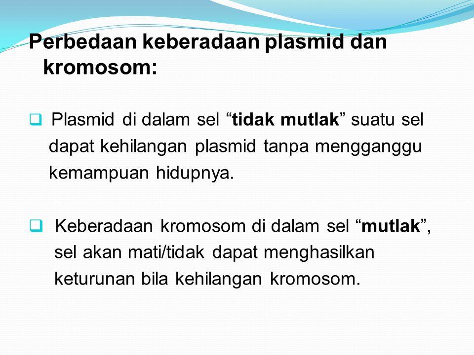 Perbedaan keberadaan plasmid dan kromosom: