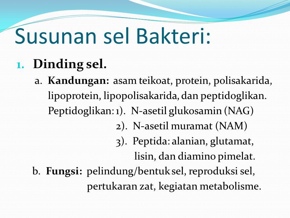Susunan sel Bakteri: Dinding sel.