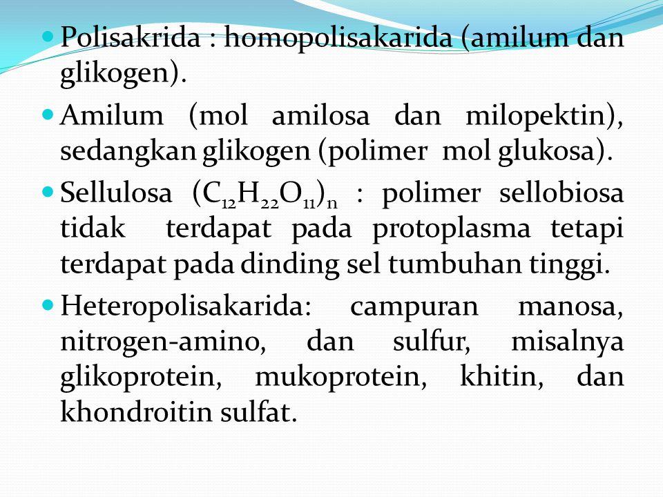 Polisakrida : homopolisakarida (amilum dan glikogen).
