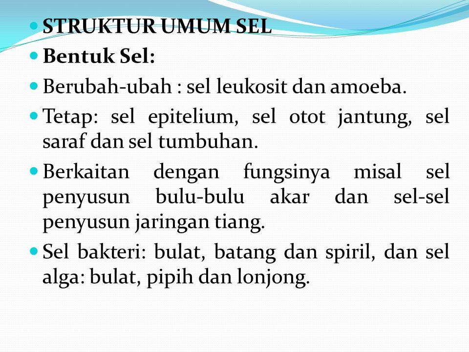 STRUKTUR UMUM SEL Bentuk Sel: Berubah-ubah : sel leukosit dan amoeba. Tetap: sel epitelium, sel otot jantung, sel saraf dan sel tumbuhan.