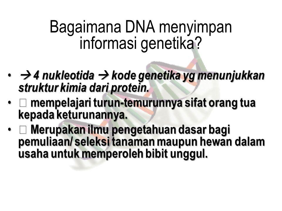 Bagaimana DNA menyimpan informasi genetika