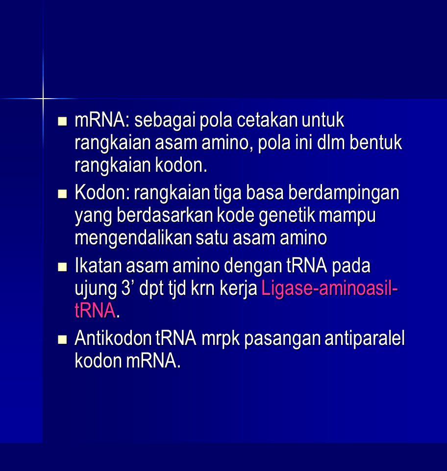 mRNA: sebagai pola cetakan untuk rangkaian asam amino, pola ini dlm bentuk rangkaian kodon.