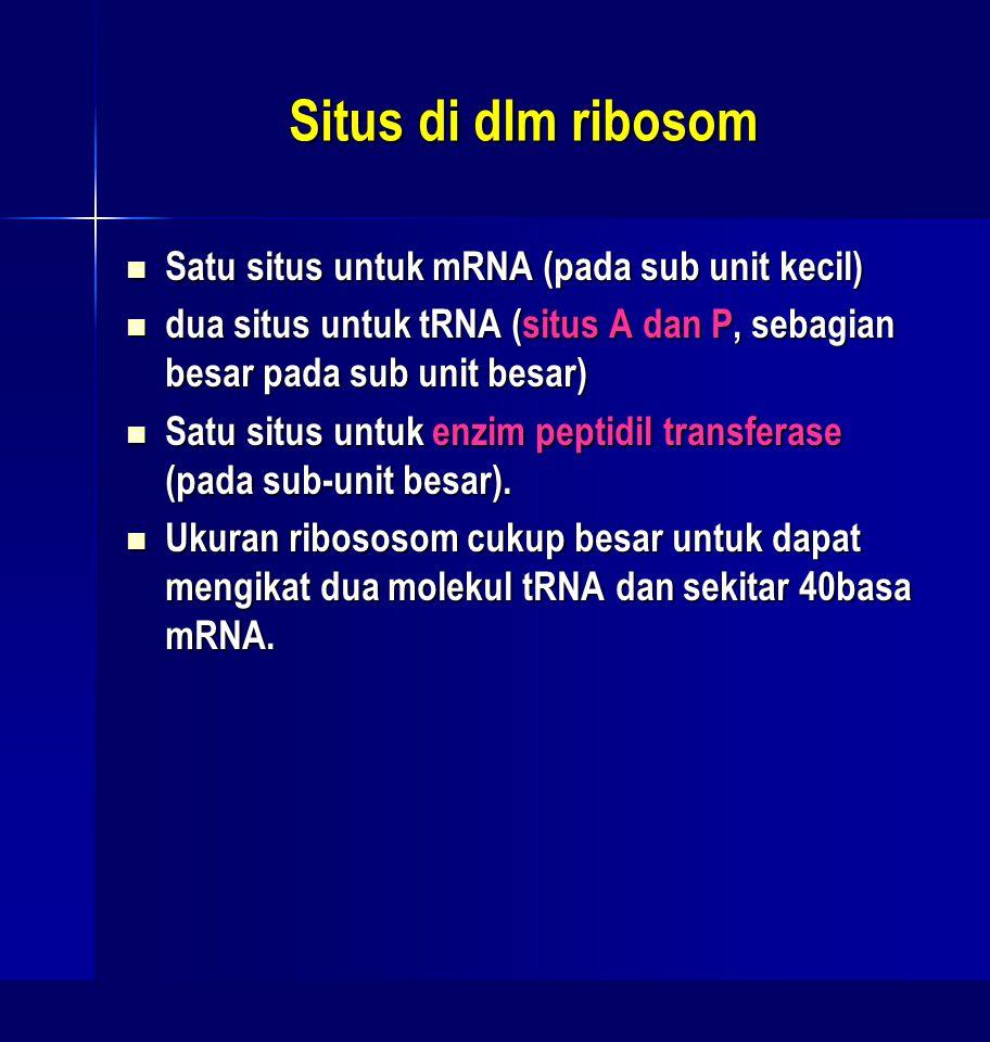 Situs di dlm ribosom Satu situs untuk mRNA (pada sub unit kecil)