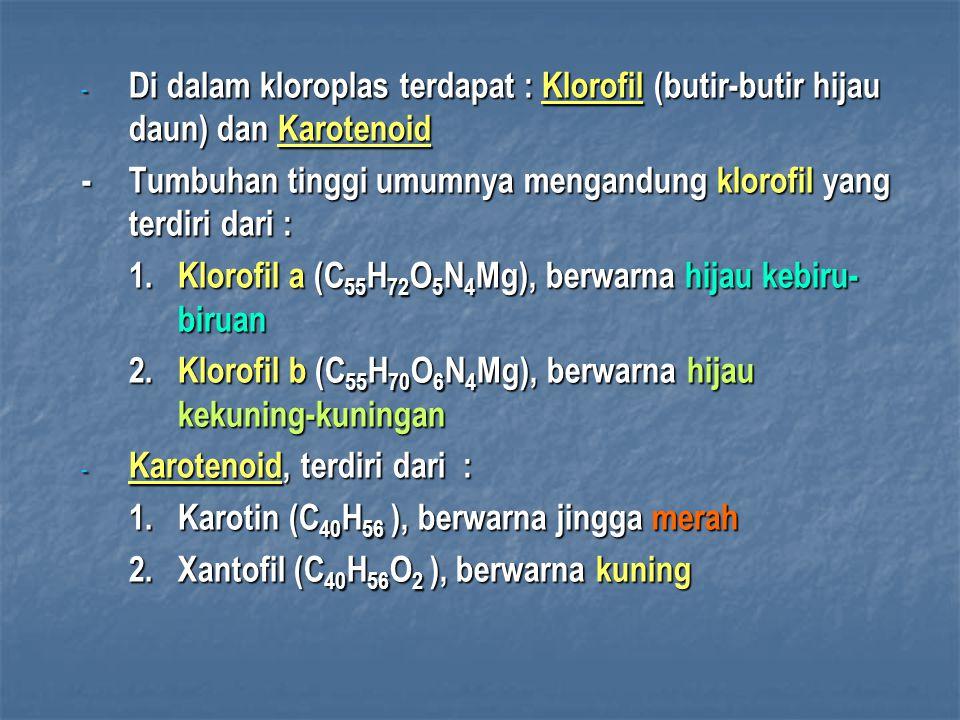 Di dalam kloroplas terdapat : Klorofil (butir-butir hijau daun) dan Karotenoid