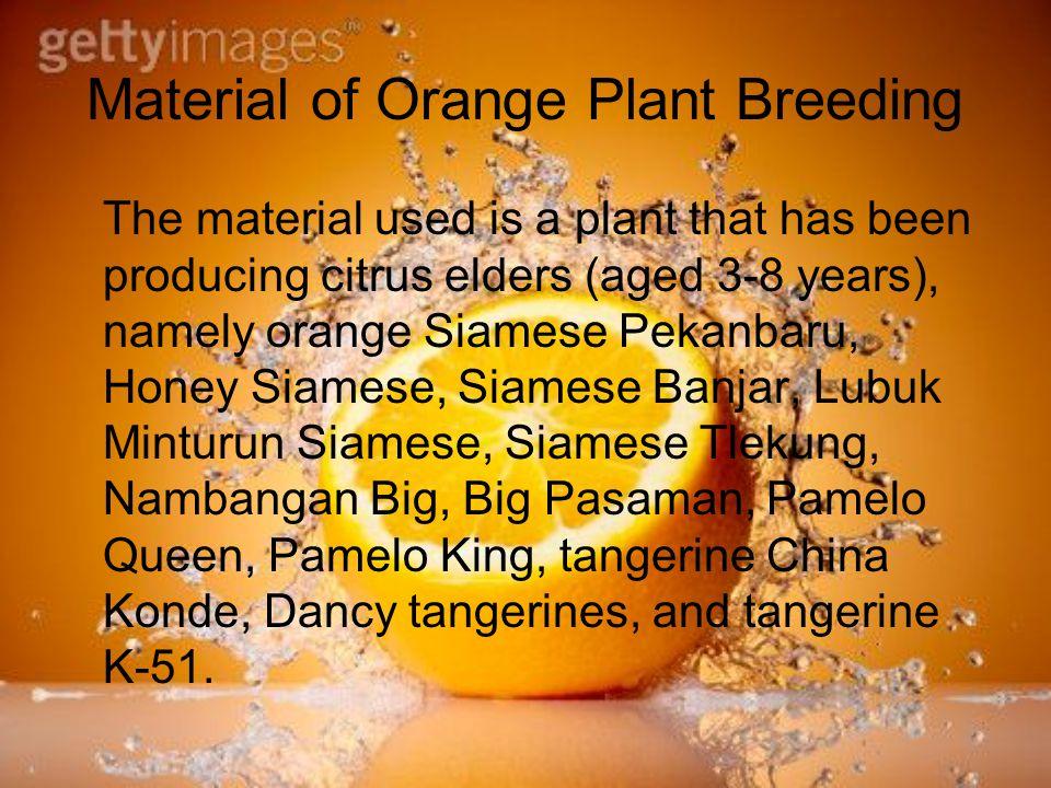 Material of Orange Plant Breeding
