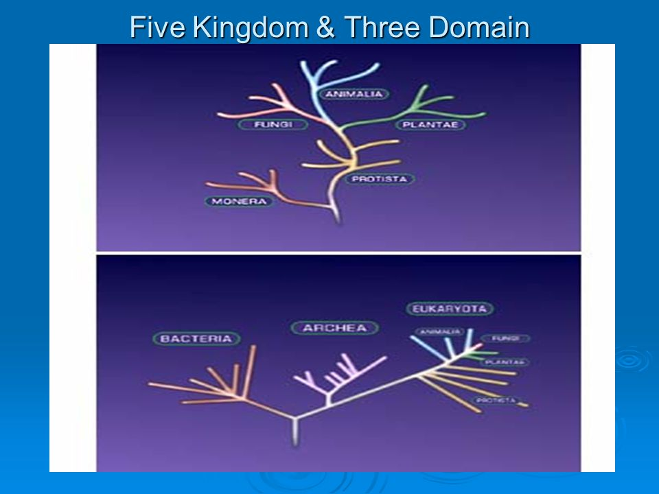 Five Kingdom & Three Domain