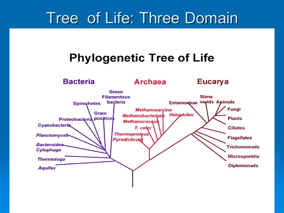 Tree of Life: Three Domain