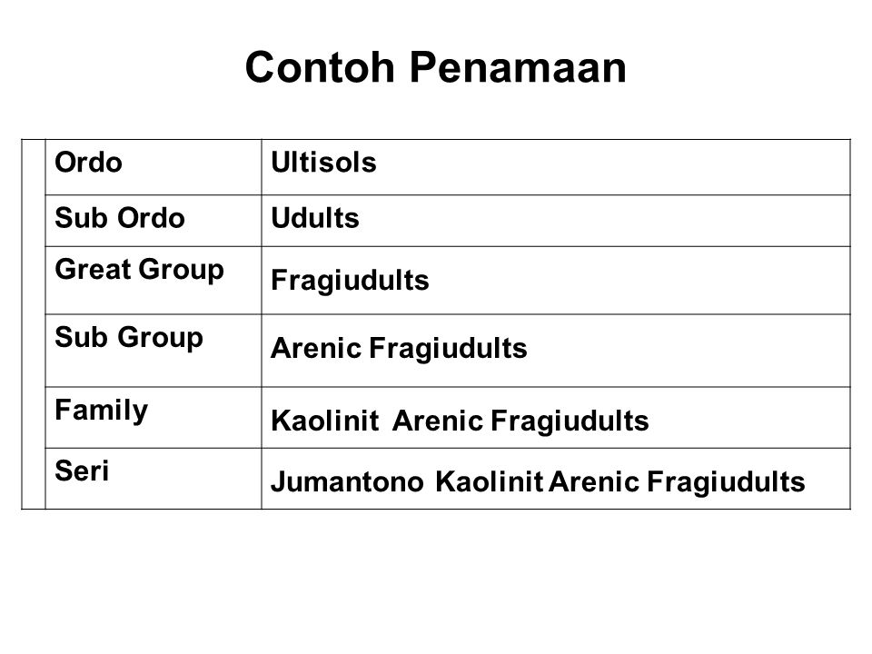 Contoh Penamaan Ordo Ultisols Sub Ordo Udults Great Group Fragiudults