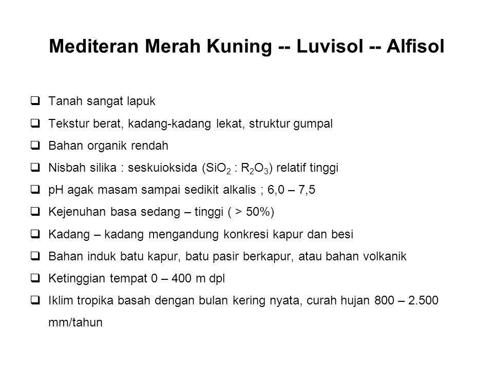 Mediteran Merah Kuning -- Luvisol -- Alfisol