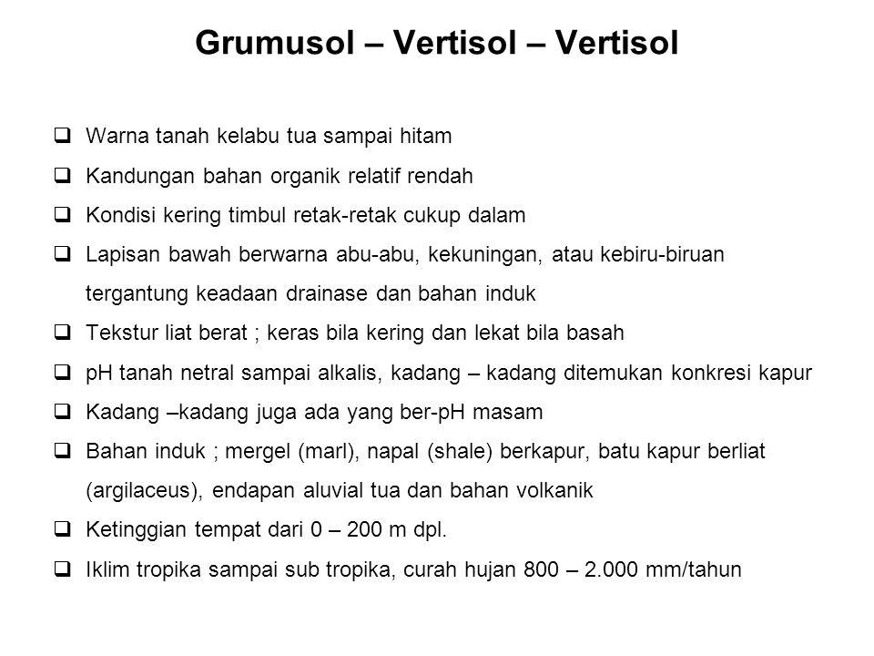 Grumusol – Vertisol – Vertisol
