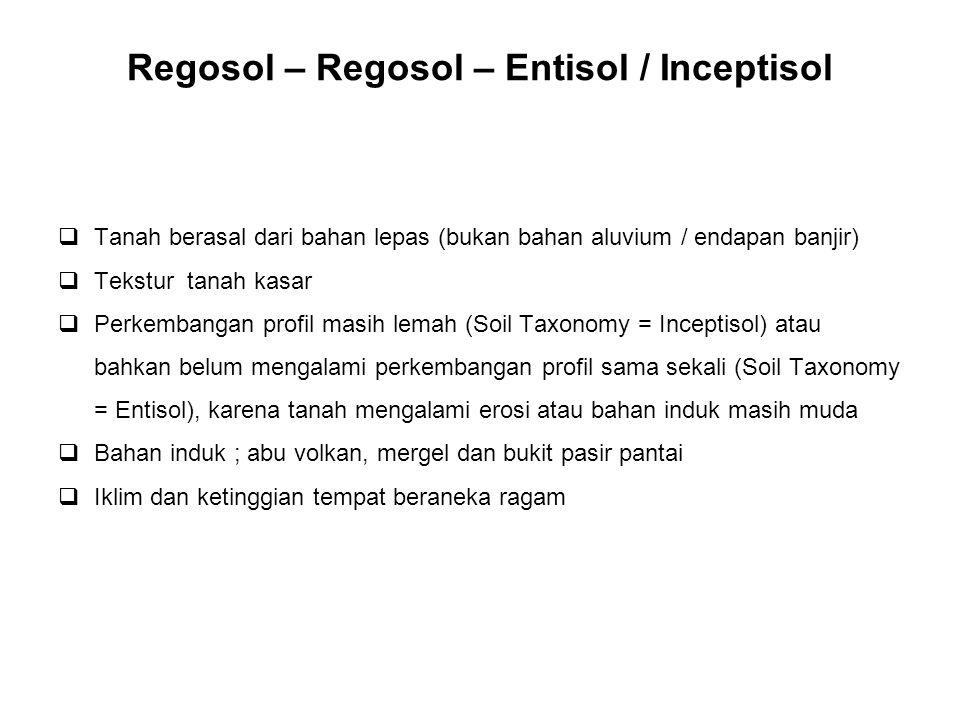 Regosol – Regosol – Entisol / Inceptisol