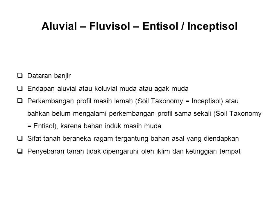 Aluvial – Fluvisol – Entisol / Inceptisol