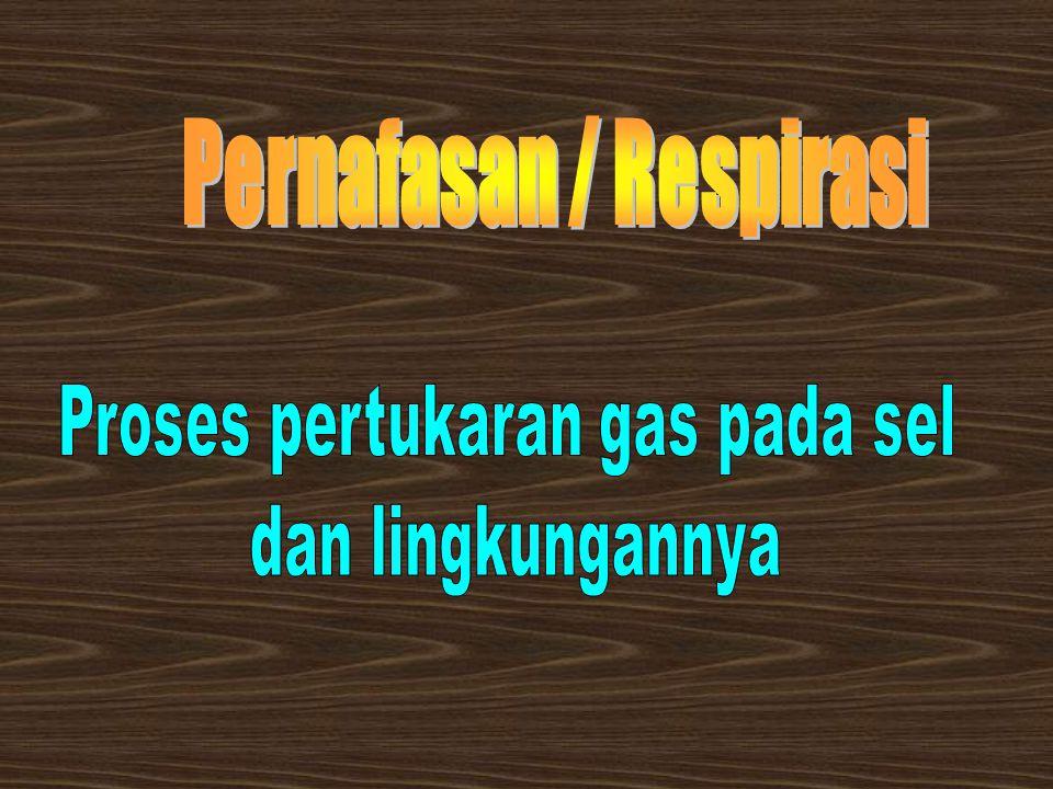 Pernafasan / Respirasi