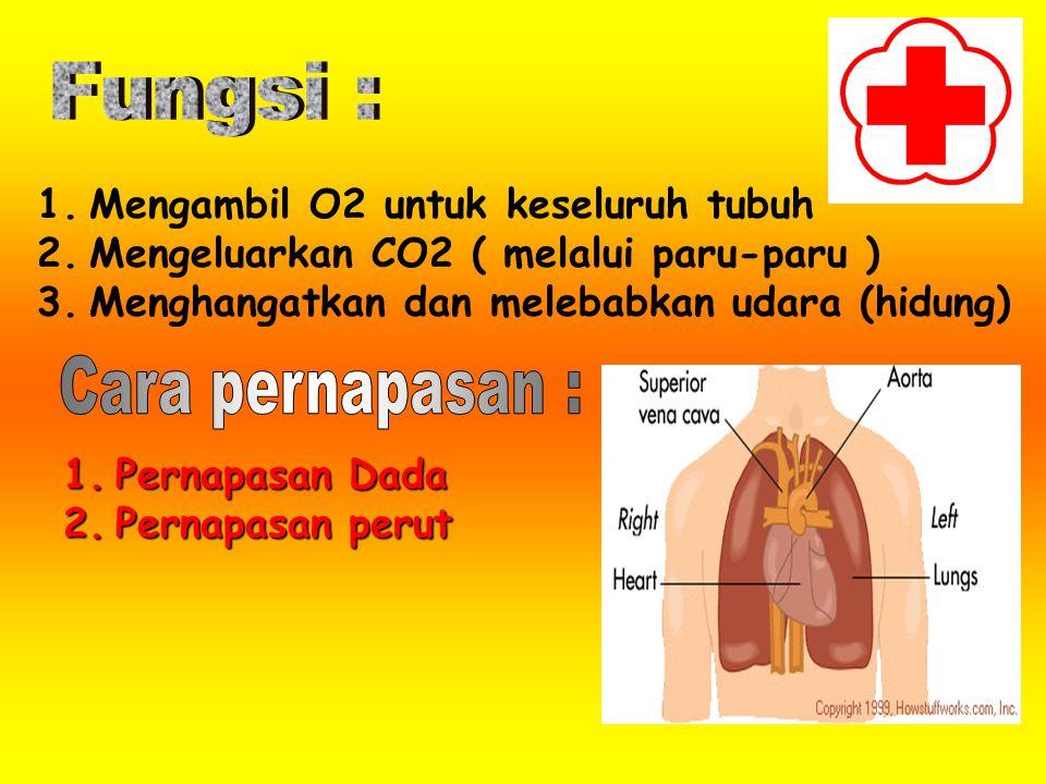 Fungsi : Cara pernapasan : Mengambil O2 untuk keseluruh tubuh